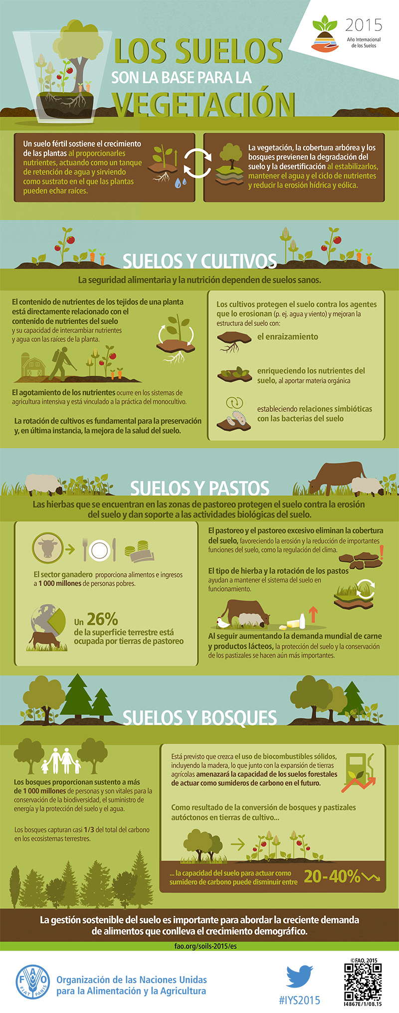 FAO-Infographic-IYS2015-fs4-es-01